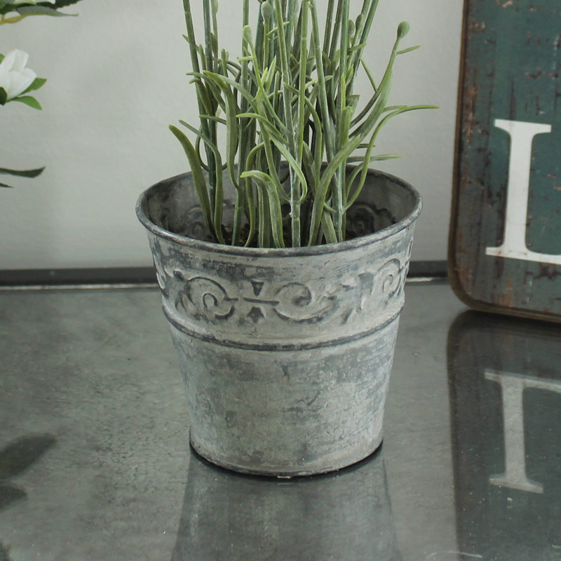 Lavender in Plant Pot