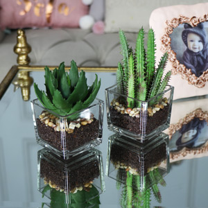Artificial Cactus and Aloe Vera Plants in Glass Pots