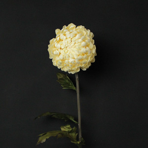 Cream Chrysanthemum Flower Stem