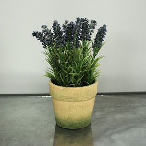 Lavender in Rustic Pot
