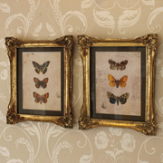 Two Ornate Gold Framed Butterfly Prints