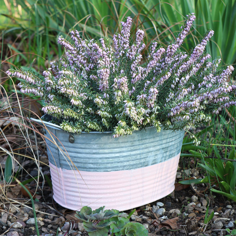 Grey & Pink Oval Metal Trough Planter