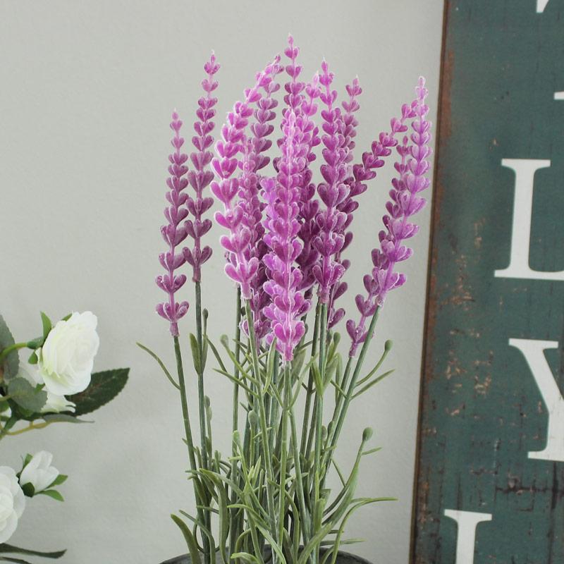 Lavender in Plant Pot