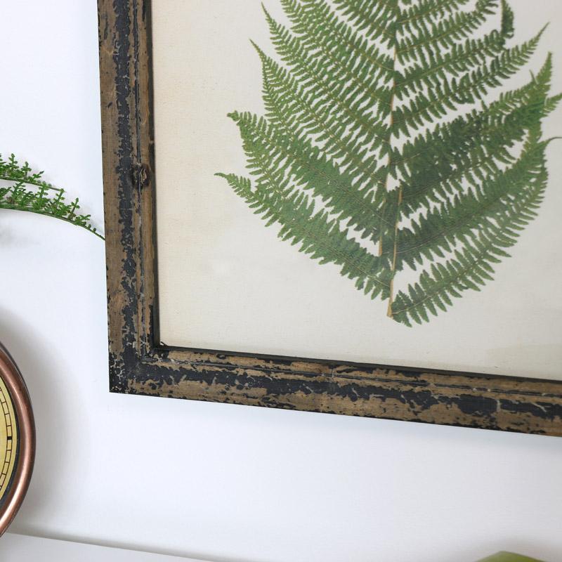 Rustic Fern Framed Print