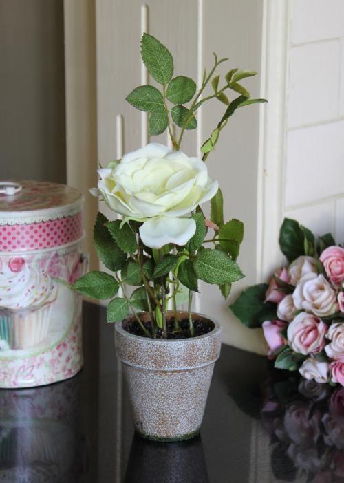 White Ornamental Rose