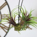 Faux Mixed Tillandsia Hanging Plant