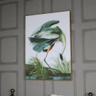 Large Green Tropical Crane Picture