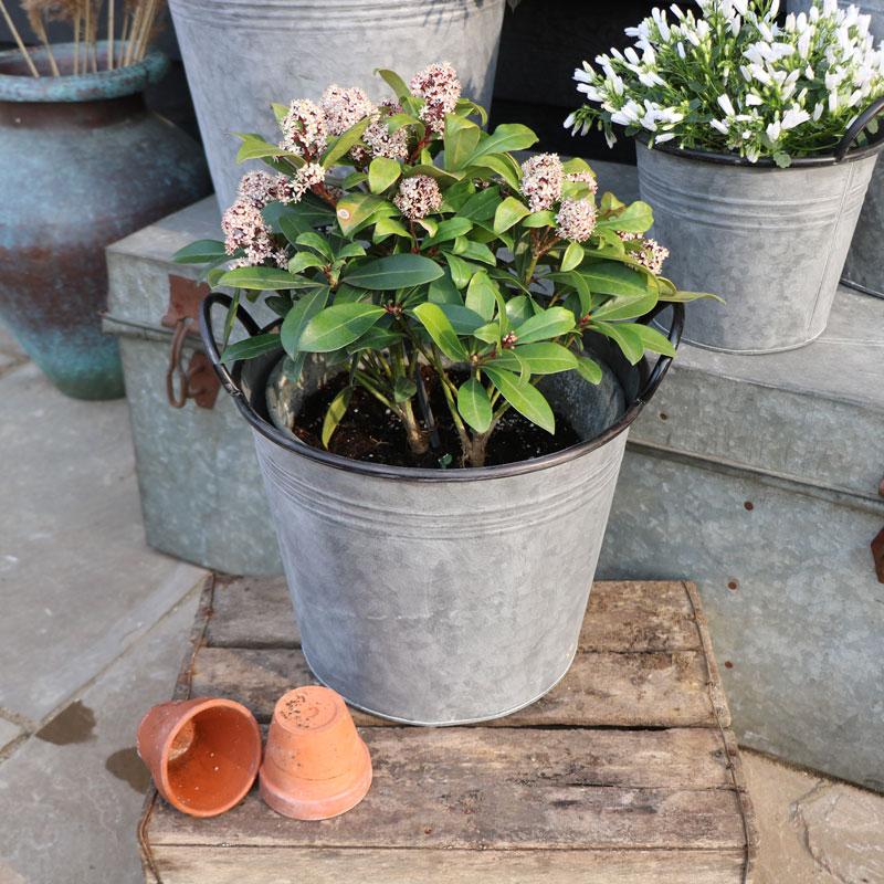 Medium Metal Bucket Planter