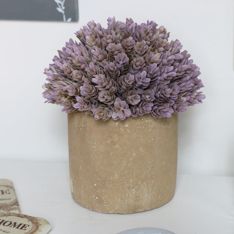 Purple Succulent in Stone Pot