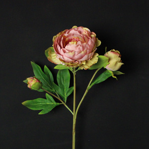 Dark Dusky Pink Rose