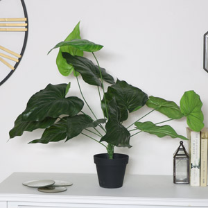 Faux Cheese Plant