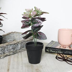 Faux Hypoestes Plant