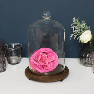 Glass Cloche Dome Display