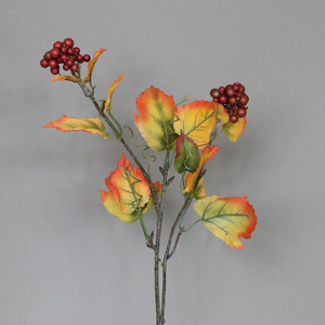 Orange Red Berry Stem