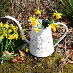 Ornamental Grey Vintage Watering Can
