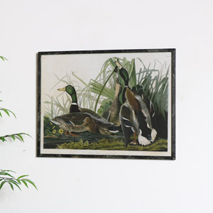 Rustic Framed Mallard Duck Reproduction Print