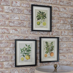 Set of 3 Framed Citrus Wall Prints