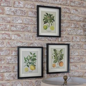 Set of 3 Framed Citrus Wall Prints