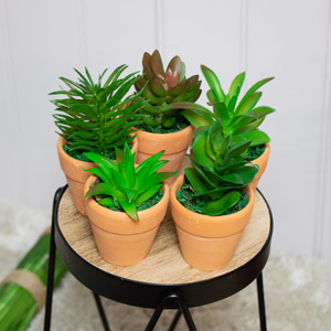 Set of 5 Faux Succulent Plants in Pots