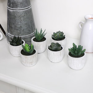 Set of 6 Potted Succulents