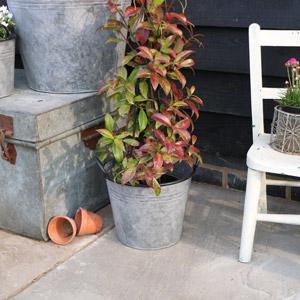 Small Metal Bucket Planter