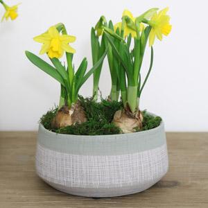 Small Round Grey & Green Planter Pot