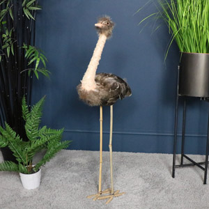 Tall Feathered Ornamental Emu